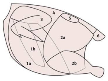 Geflügel – Beschreibung der Teilstücke