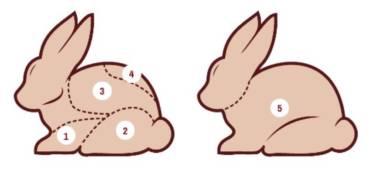Kaninchen Fleischanatomie