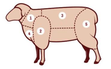 Schaf / Lamm – Beschreibung der Teilstücke